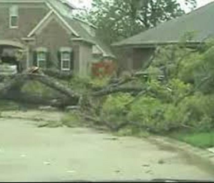 Storm Damage - Fallen Tree in Clarksville